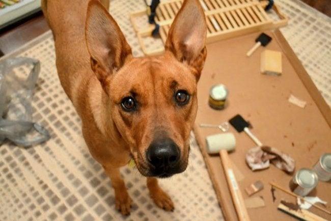 S Fogle Blog Star Workshop Dog Charlie