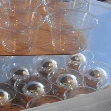 Lifehacker Holidayornamentstoragewithplasticcups Rev