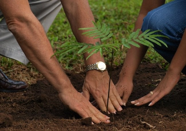 Green Tips for the Home - Plant a Tree