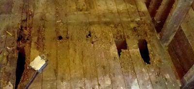 Termite damage in the floor under our refrigerator