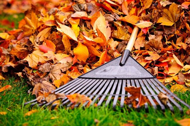 fall-home-maintenance-checklist-yard-cleanup