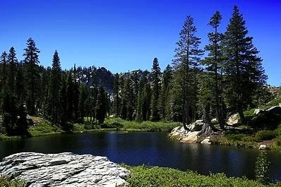 Arborday.org-Plumas-National-Forest