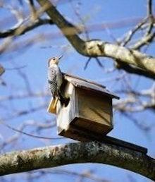 Make a Birhouse - Tree Branch