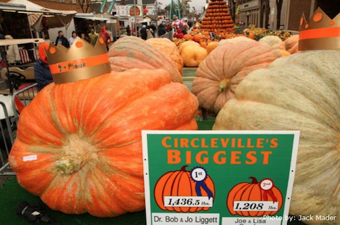 Pumpkin Festivals - Prize Pumpkins
