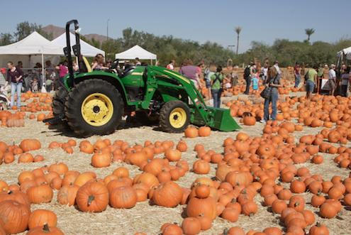 Pumpkin Festivals - Phoenix