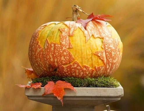 Pumpkin Leaf Print