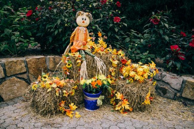 decorative straw bales with straw scarecrow