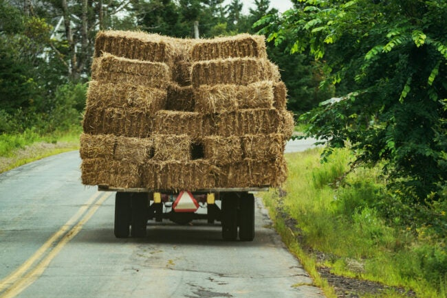 decorative straw bales