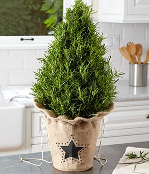 Decorative tabletop Christmas tree - ProFlowers