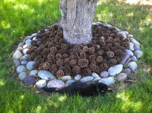 Pine Cone DIY - Natural Mulch