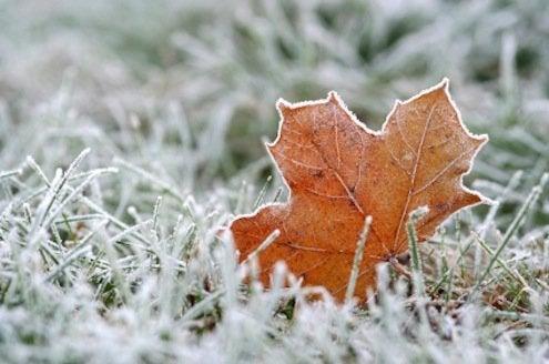 Winter Lawn