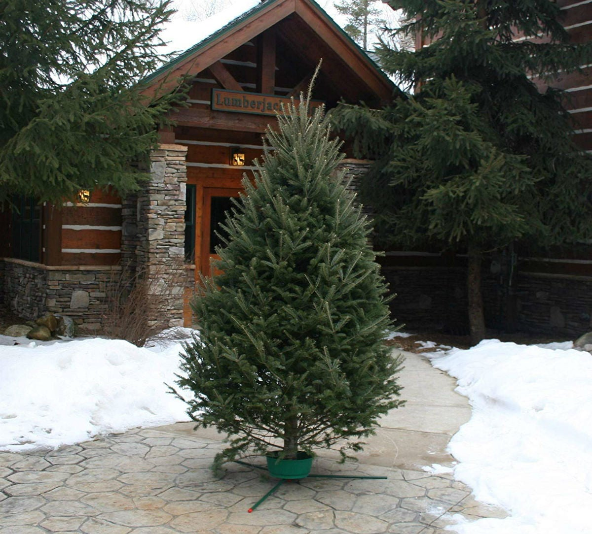 The 5 Best Christmas Tree Types