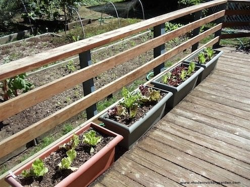 Grow Salad Greens in Containers - Deck Container Garden