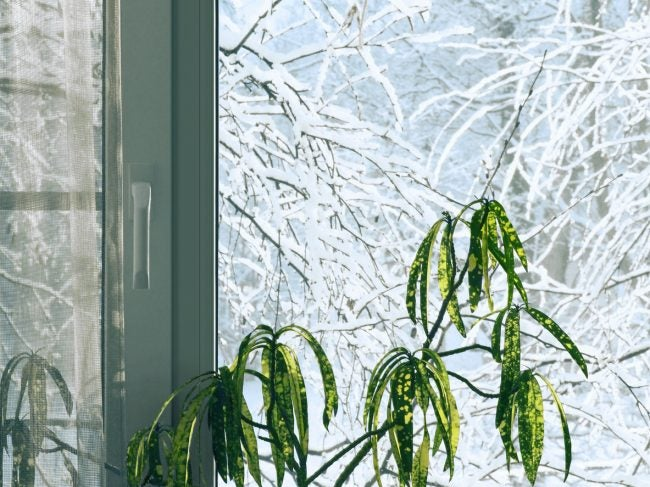 8 Tips for Caring for Houseplants in Winter