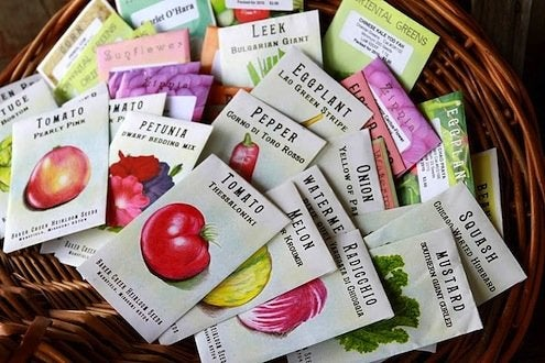 Buy Seeds - Seed Packets