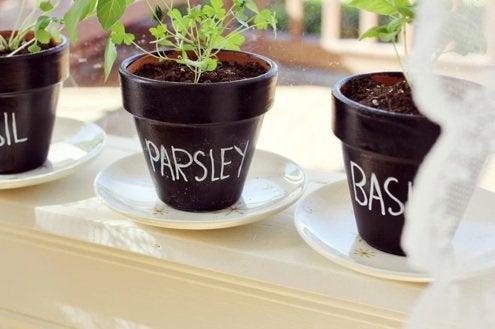 Grow Herbs Indoors - Chalkboard Painted Pots