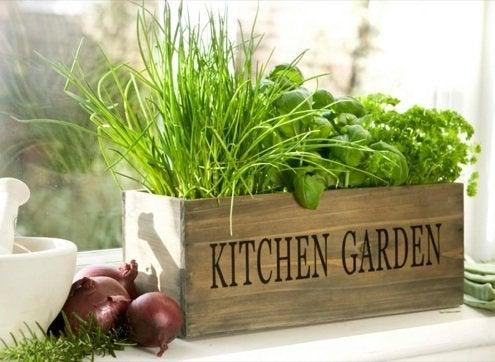 Grow Herbs Indoors - Window Planter