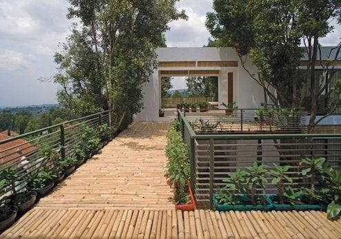 Landscaping with Bamboo - Walkway