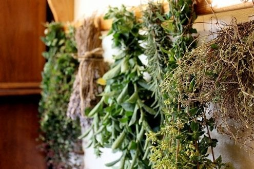 Drying Herbs - Hanging