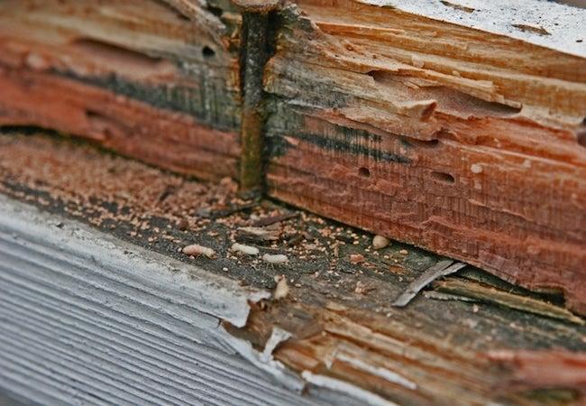 Termite Infestation Opener
