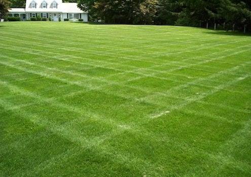 Grass Alternatives