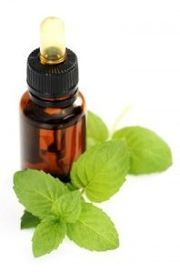 Apartment Pest Control - Peppermint Oil