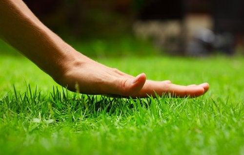 spring-lawn-preparation