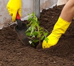 Transplant a Plant - Hand Tool