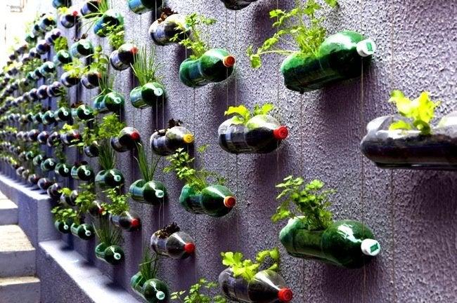 Vertical Gardens - Soda Bottle Planters