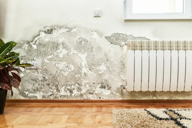 Prevent Mold and Mildew