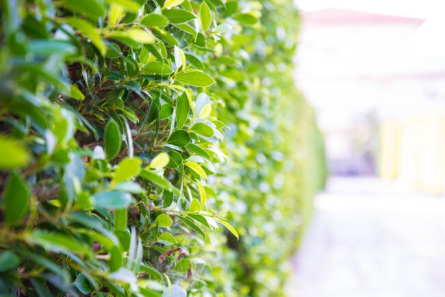 Landscaping Ideas - Hedges