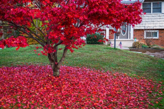 Landscaping Ideas - Trees