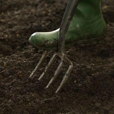 Fall Vegetable Garden - Digging
