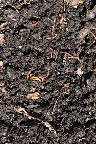 Vermiculture - Compost