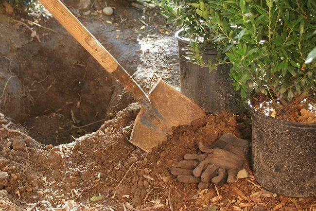 How to Plant a Bush - Hole Digging