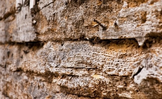 Buying a Fixer-Upper - Wood Rot