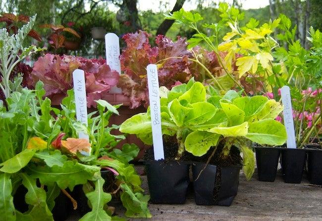 Repurpose Window Blinds - Garden Markers