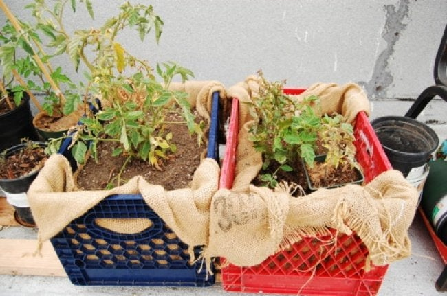 Uses for Milk Crates - Planter