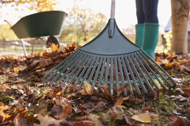 The Best Method for Raking Leaves