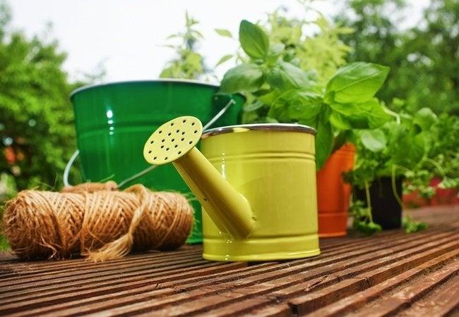New Homeowner Tips - Gardening