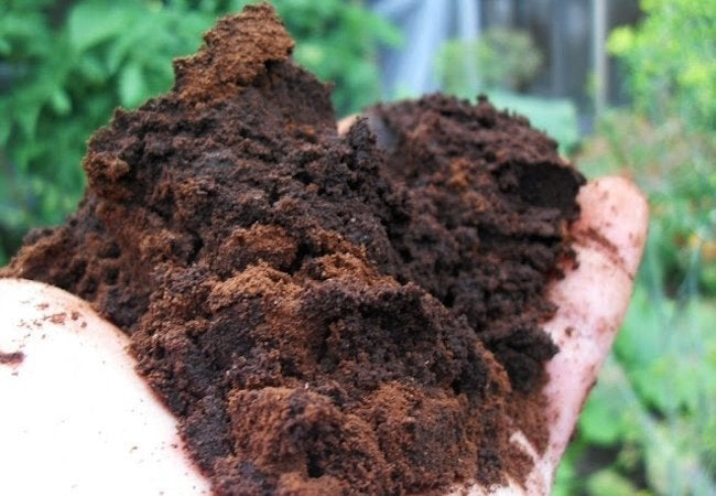 Uses for Coffee Grounds - Compost