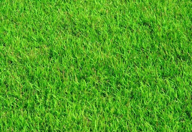 Homemade Fertilizer for Lawns - Repeat