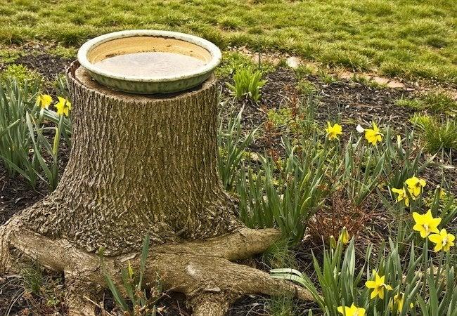 Tree Stump Ideas - Bird Bath