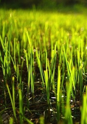 How to Plant Grass Seed - Detail