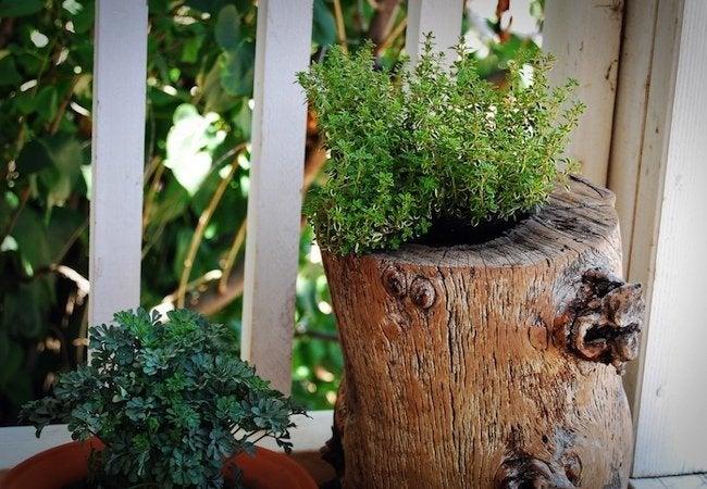 Tree Stump Ideas - Planter