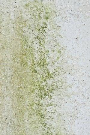 How to Kill Mold - Detail Mold