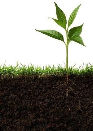 How to Test Soil pH - Detail
