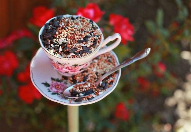 DIY Bird Feeder - Tea Cup
