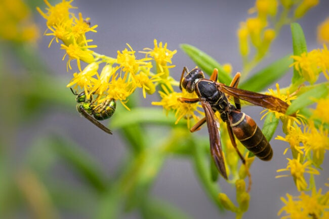 how to get rid of wasps