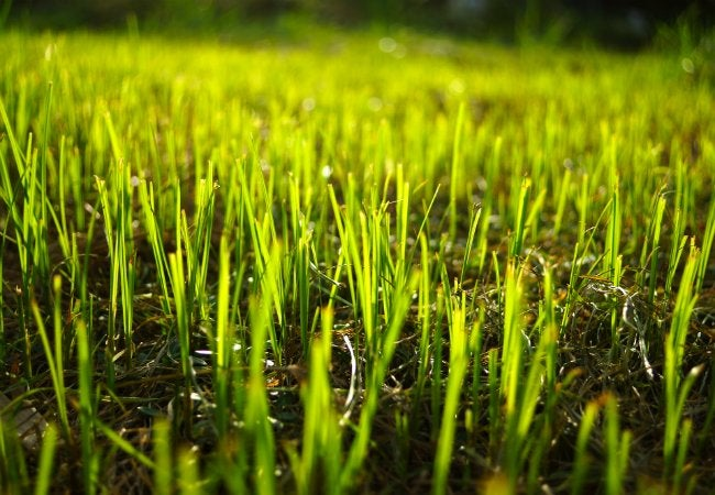 Protect New Grass